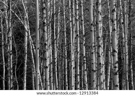 High Contrast Aspen Background