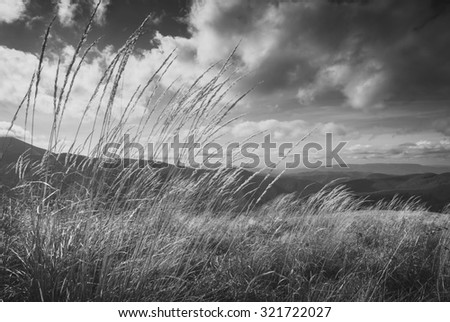 High grass on a wind in a Carpathian mountain valley. Monochrome colors