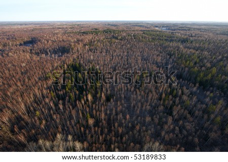 High view over birch and spruce forest