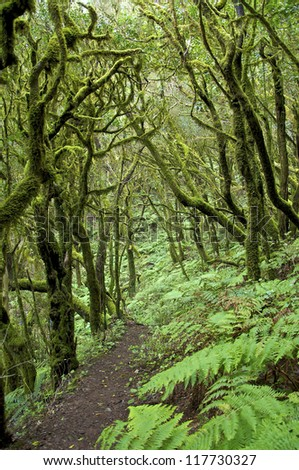 Hiking in the National Park Garajonay on La Gomera. The Cloud Forest Garajonay on La Gomera is a  UNESCO World Heritage Site.