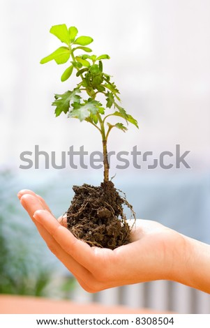 Holding a new plant in hand