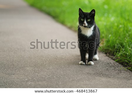 homeless black and white cat on asphalt
