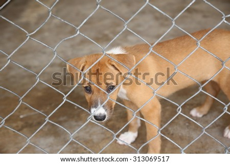Homeless Thai dog in cage waiting for new people to adopt to new home