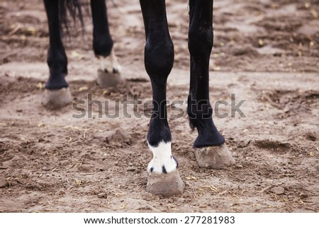 hooves of horses close