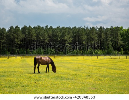 Horse feeding on grass in a meadow