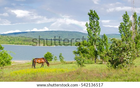 horse grazing in a pasture near lake