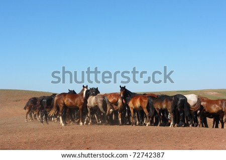 Horse herd grazing on the steppe red clay hills against a blue sky