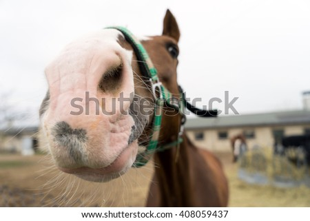 Horse in a paddock / Horse