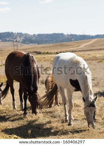 Horses grazing in the field.