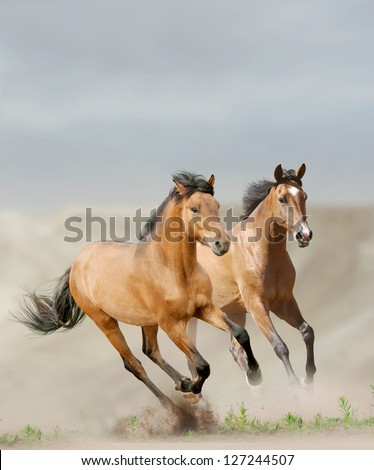 horses in dust running