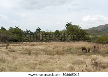 Horses in pasture on Trinidad countryside, Cuba