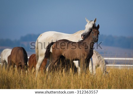 Horses on the morning pasture