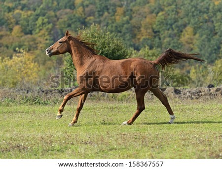 Horses running on the field