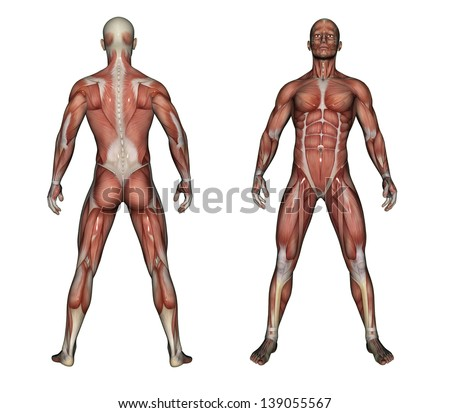 3d render depicting human anatomy muscles stock illustration, Muscles