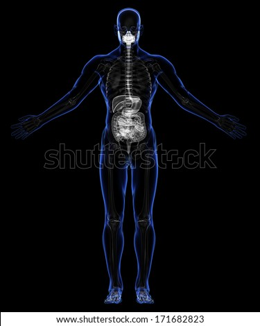 the skin skeletal system 103 understand the functions and disorders of the skeletal system  ra may  also affect the skin, eyes, lungs, heart, blood, or nerves rheumatoid arthritis is a .