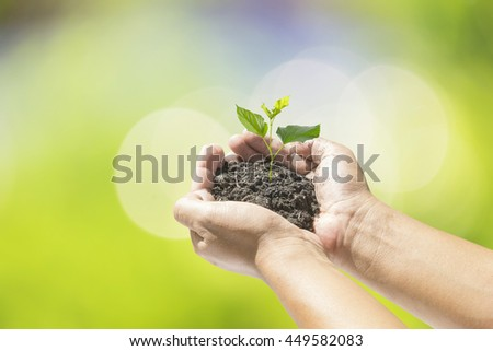 Human hands holding small plant over blurred nature background. Ecology concept.
