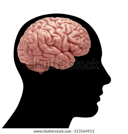 human head with brain and white, background