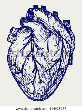 Human Heart. Doodle style. Raster version