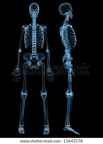 xray full body skeleton brightness blue stock illustration, Skeleton