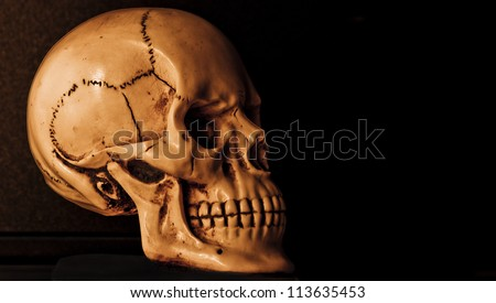 human skull model in dark background
