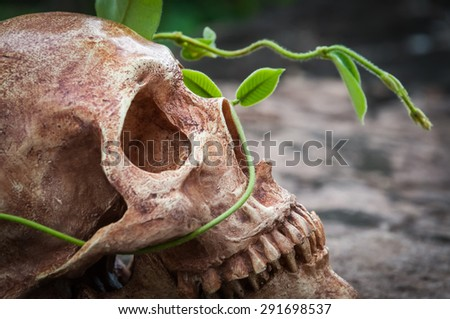 human skull on stone and growing plant on it