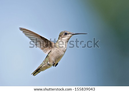 Hummingbird against a blue sky