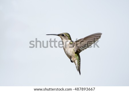 Hummingbird Hovering Against Light Blue Autumn Sky