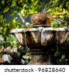 Hummingbird Taking a Bath in an Outside Fountain with Foliage in the Background - stock photo