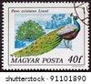 "HUNGARY - CIRCA 1977: A stamp printed in Hungary from the ""birds"" issue shows a Peacock, circa 1977. - stock photo"