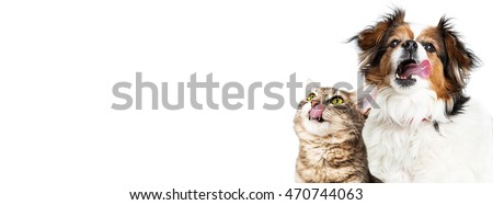 Hungry dog and cat licking lips on horizontal banner with copy space sized for a popular social media website cover image
