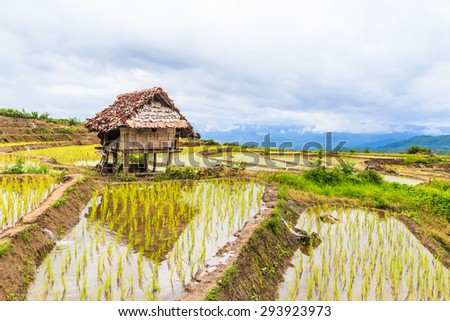 Hut and Terraced Rice Field in Pa Pong Pieng,Chiang Mai, Thailand