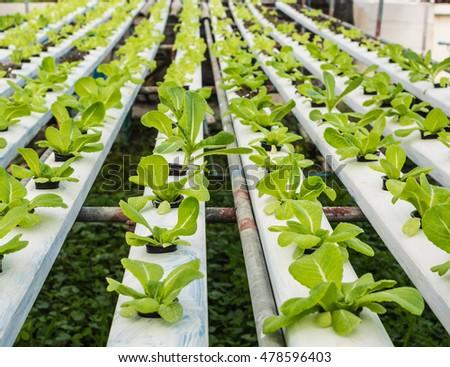 hydroponics vegetablered corel stock photo 96215234 shutterstock. Black Bedroom Furniture Sets. Home Design Ideas