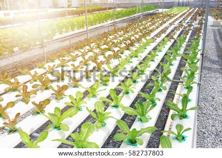 hydroponic vegetables growing greenhouse cameron highlands stock photo 140251060 shutterstock. Black Bedroom Furniture Sets. Home Design Ideas
