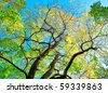 I See Trees of Green - stock photo