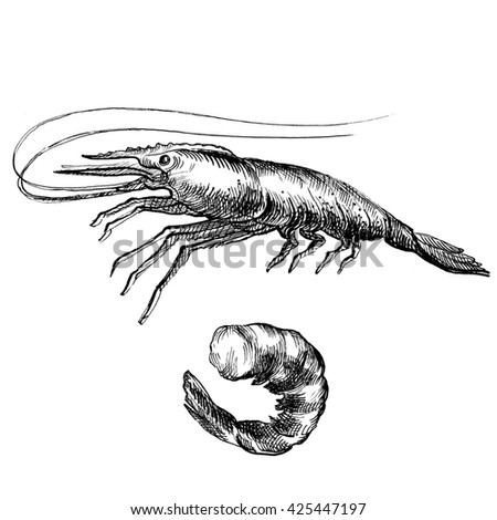 Illustration ink seafood shrimp,  tail.  Elements for the graphic design of the menu bars, restaurants, invitations, announcements.