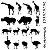 illustration of isolated giraffe,rhinoceros,deer,ostrich .JPG (EPS vector version id 125269061,format also available in my portfolio) - stock photo