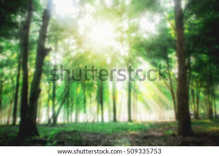 Image blur use for background. forest trees in nature green wood ...
