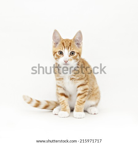 Image of a stripy red kitten looking right at the camera.