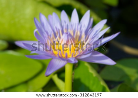 Image of Blur background with lotus flower, Abstract beautiful nature background, Shining logo with lotus symbol.