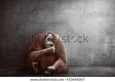 Image of orangutan monkey over abstract background