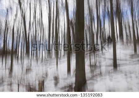 Impression of a winter forest