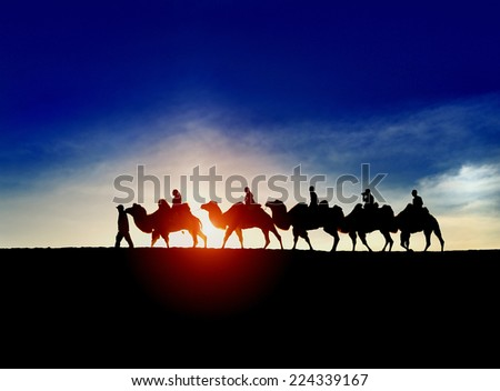 In China's Inner Mongolia, desert camel at sunset