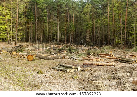 industrial deforestation and logging