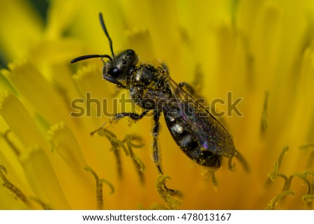 Insect on Dandelion