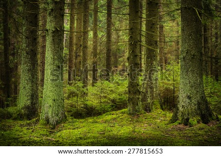 inside of the green spruce forest
