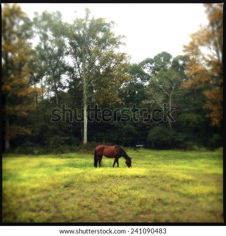 Instagram Filtered Image of a Lone Horse Grazing at the Farm