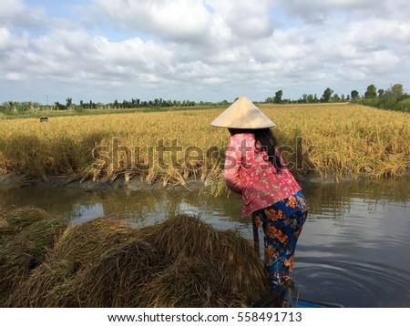 Integrating freshwater prawn culture with rice in Vietnam