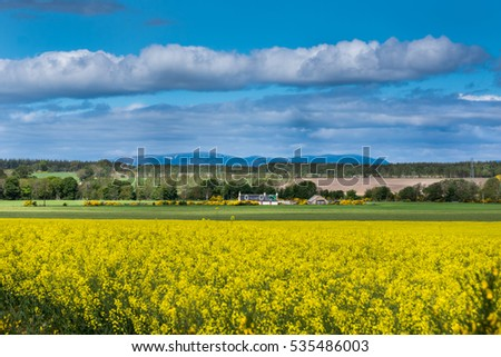 Inverness, Scotland - June 2, 2012: Wide shot of rural landscape showing a farm in the center, large yellow rapeseed in bloom field up front. All under blue sky. Mountains and forest in back.