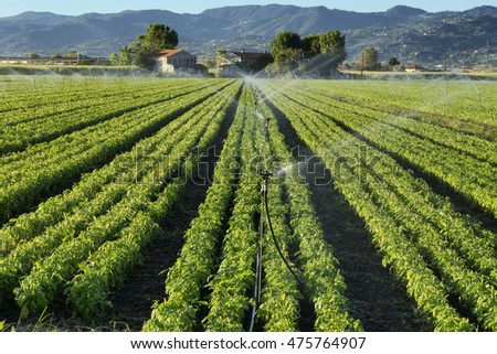 irrigation system on a basil field