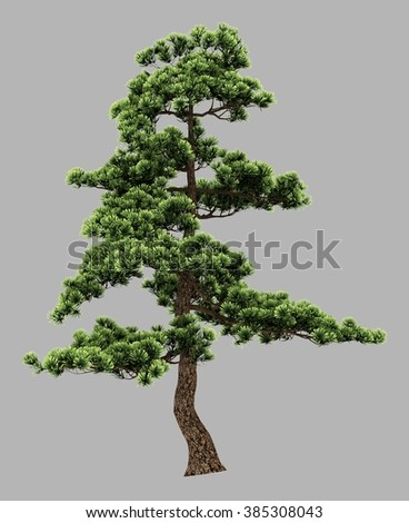 isolated 3d rendered old pine tree with alpha channel